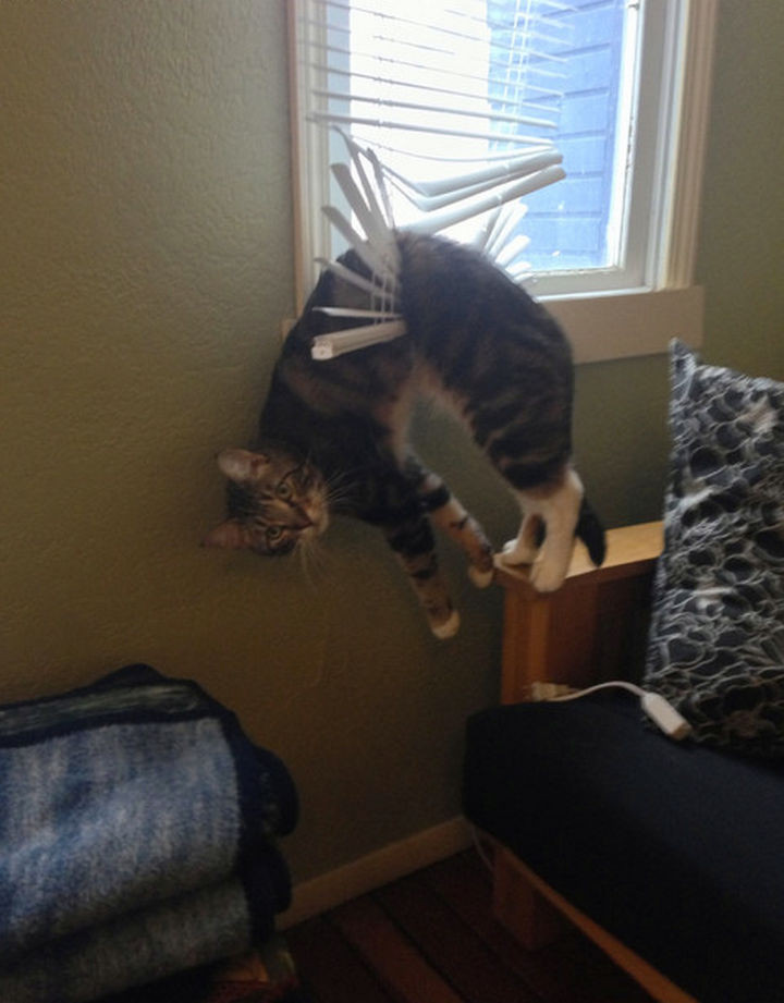 35 Photos of Animals Stuck in the Weirdest Places - When looking out the window turns out to be a bad idea.