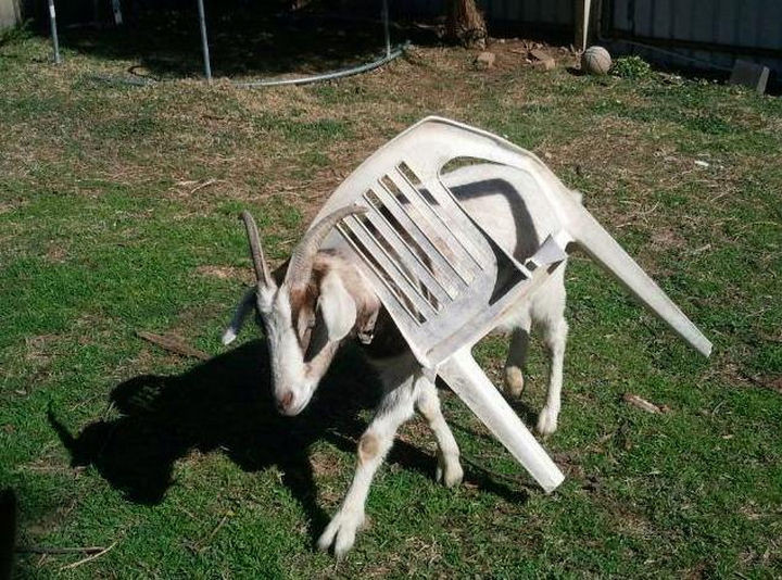 35 Photos of Animals Stuck in the Weirdest Places - LOL, what was he thinking?