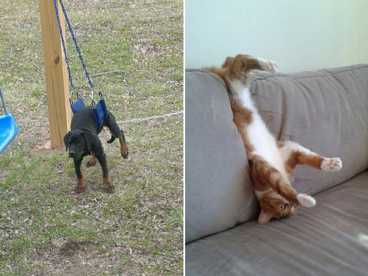35 Photos of Animals Stuck in the Weirdest Places - So close, yet so far.