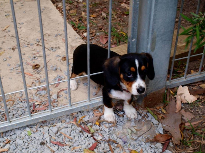 35 Photos of Animals Stuck in the Weirdest Places - Cuteness caught in a fence.