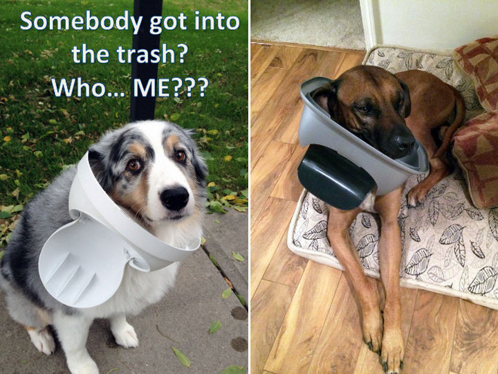 """35 Photos of Animals Stuck in the Weirdest Places - """"What trash can?"""", they said."""