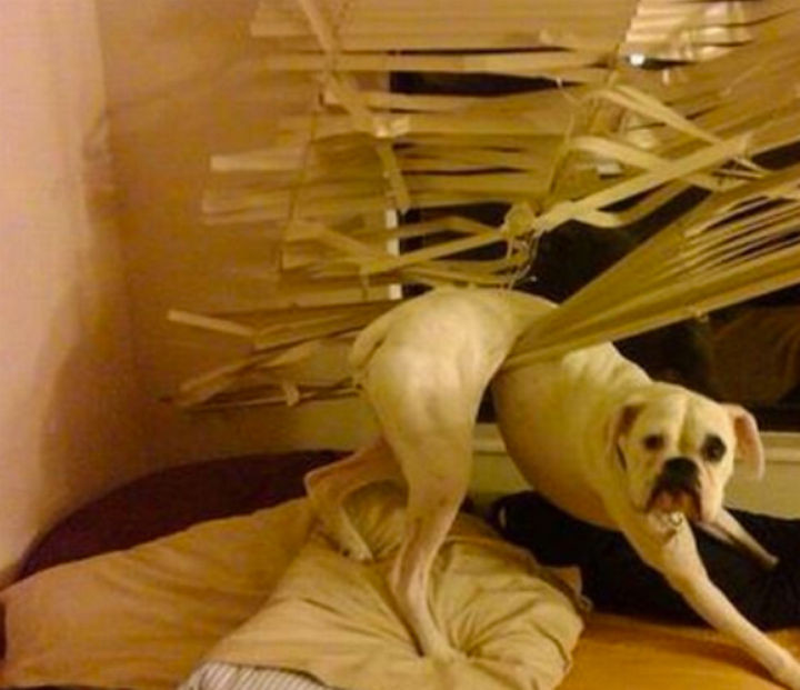 35 Photos of Animals Stuck in the Weirdest Places - I bet he's sorry.