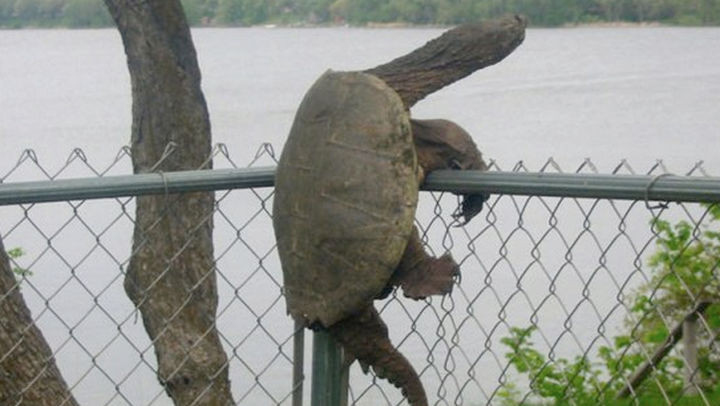 35 Photos of Animals Stuck in the Weirdest Places - Easy does it...