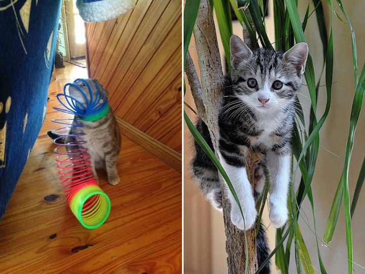"""35 Photos of Animals Stuck in the Weirdest Places - """"I could use a little help here!"""""""