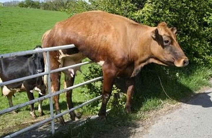 35 Photos of Animals Stuck in the Weirdest Places - So much for having an escape plan.