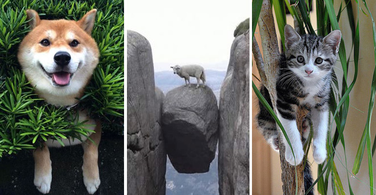 35 Funny Photos of Animals Stuck in the Weirdest Places.