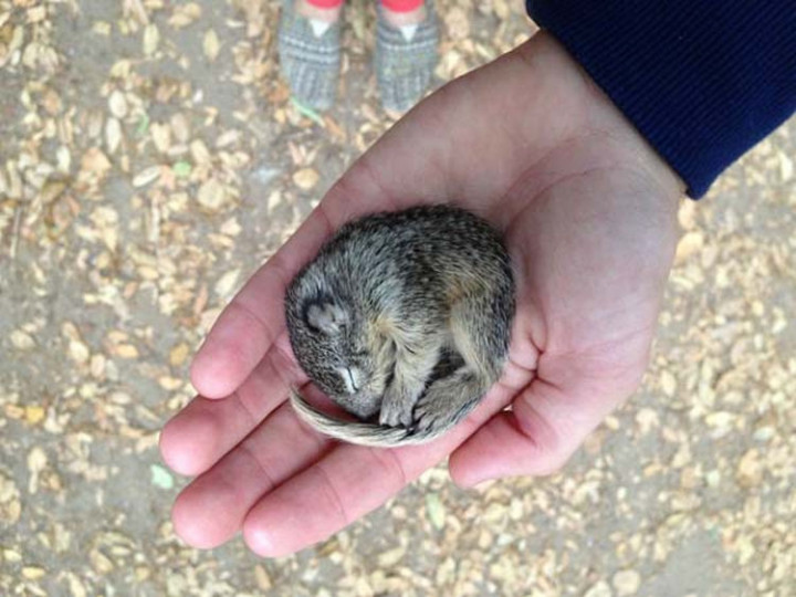 Nick found this cute baby squirrel that was curled up because it was freezing.