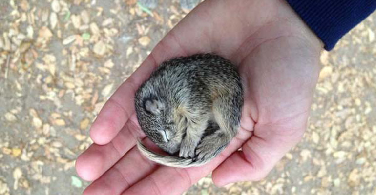Frozen Baby Squirrel Cared for by Photographer.