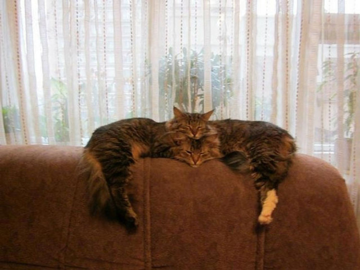 31 Hilariously Misleading Photos - That is not a cat with two heads.