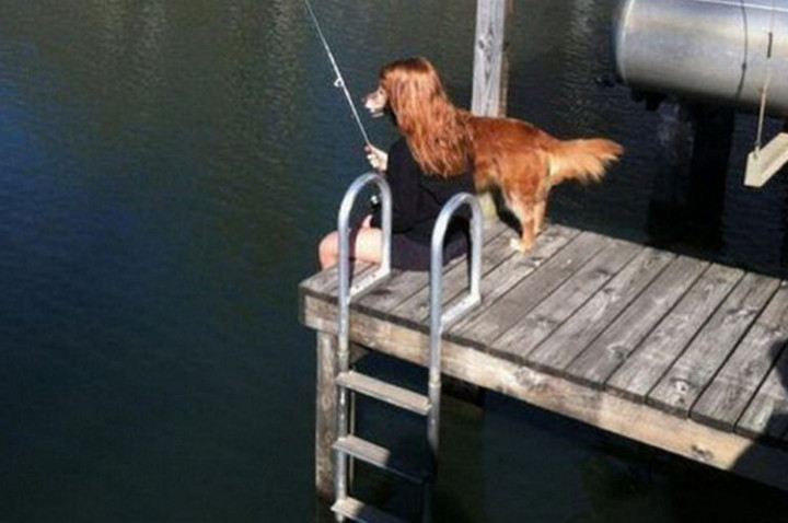 31 Hilariously Misleading Photos - That is not a dog fishing on the docks.