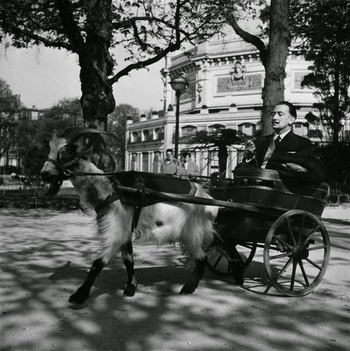 35 Rare Historical Photos - 1953: Salvador Dalí on a carriage drawn by his own goat.