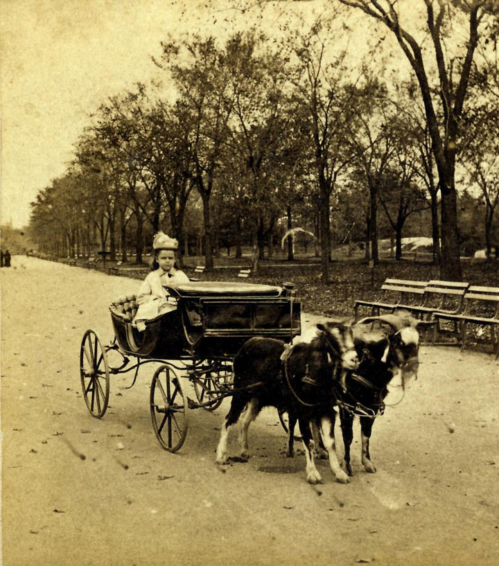 35 Rare Historical Photos - 1870: A little girl enjoying a lovely ride in a Goat Carriage in Central Park, New York.
