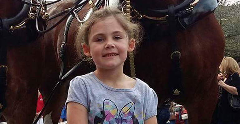 A Little Girl Took a Photo with a Clydesdale. When I Looked up at the Horse's Face…Hilarious!