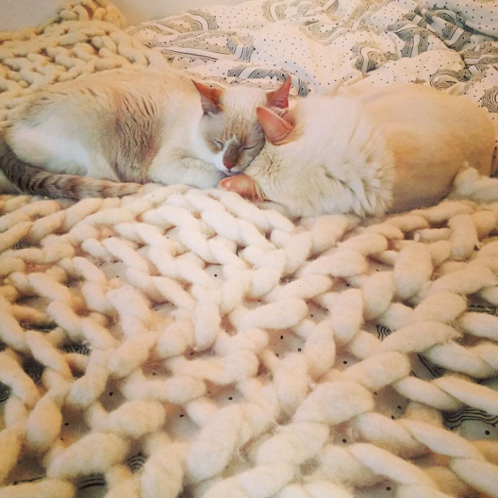 Ahhh, they both enjoy it and look so warm and snuggly resting against their new giganto knit blanket.