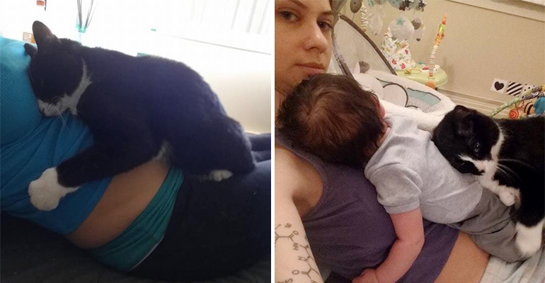 Panda the Adopted Cat Guards Her Owner's Baby.