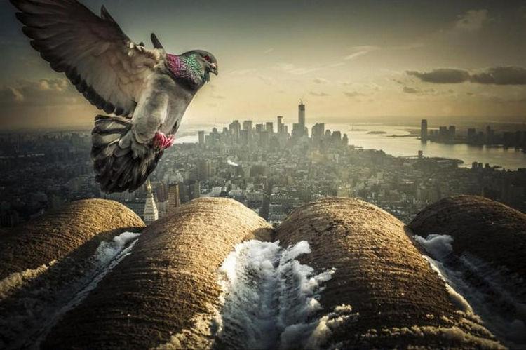 Top 25 Travel Destinations 2016 - New York City, USA 02.