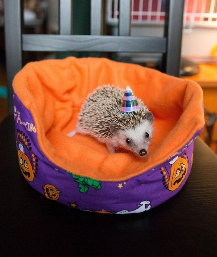 46 Happy Images - This sweet 6-month-old hedgehog having a party.