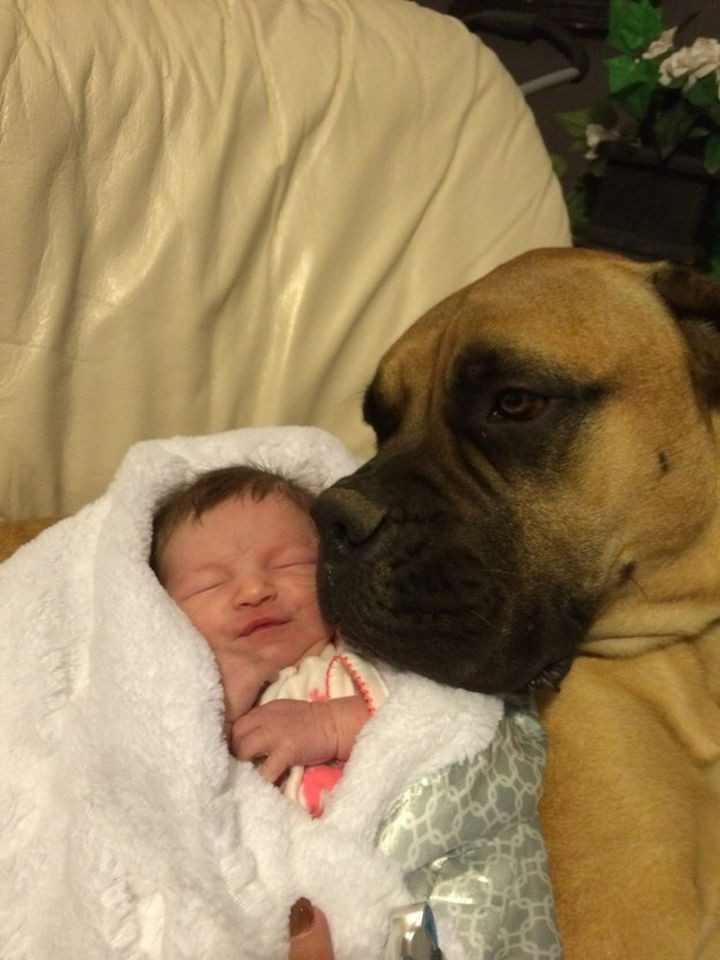 46 Happy Images - This sweet dog babysitting his new baby sister.
