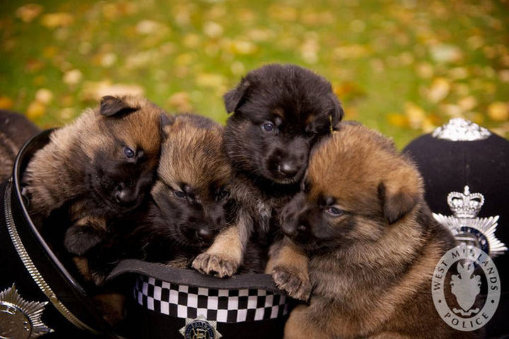46 Happy Images - These future police dogs looking cute for the camera.