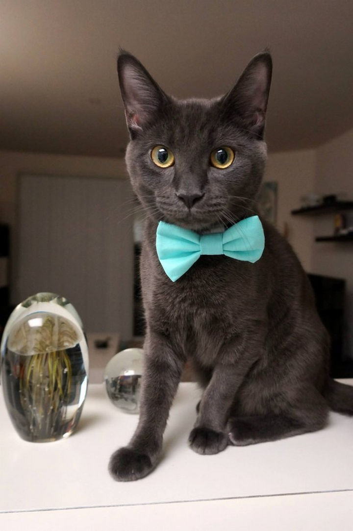 46 Happy Images - This dapper cat showing off his blue tie.