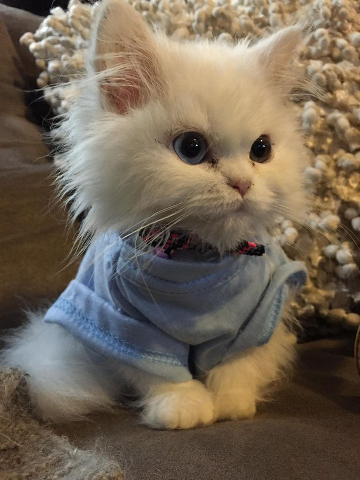 46 Happy Images - This soft and fluffy kitten.