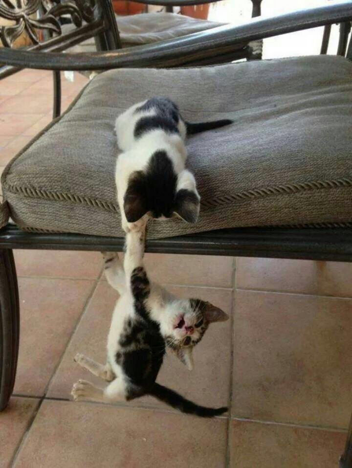 """46 Happy Images - These kittens recreating a scene from Titanic, """"I'll never let go, Jack. I'll never let go."""""""