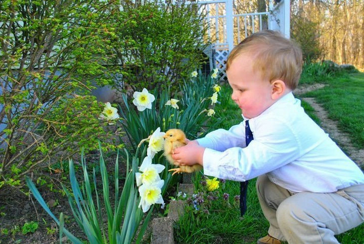 46 Happy Images - This cute toddler helping his adorable pet chick smell a flower for the first time.