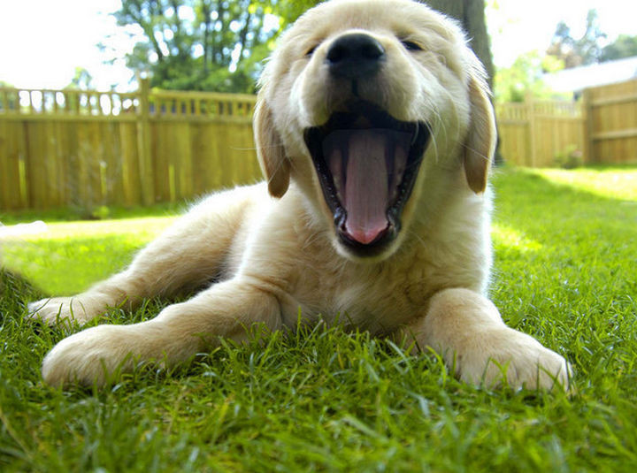 46 Happy Images - This sleepy puppy with the biggest yawn in the world.