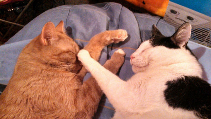 46 Happy Images - This adorable love boop.