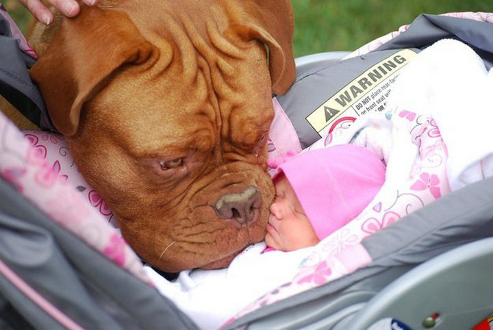 46 Happy Images - This sweet dog meeting his baby sister for the first time.
