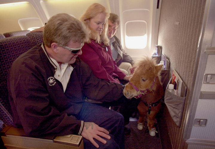 46 Happy Images - This cute miniature horse going on a flight.