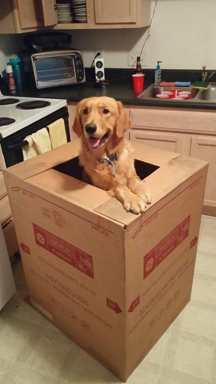 46 Happy Images - One of the best delivery packages you could ever receive.