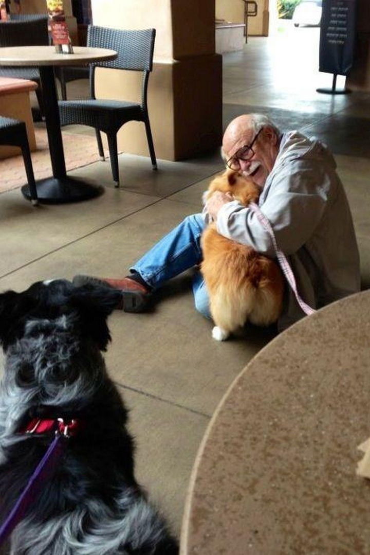 46 Happy Images - This corgi bringing joy to an elderly man she just met.