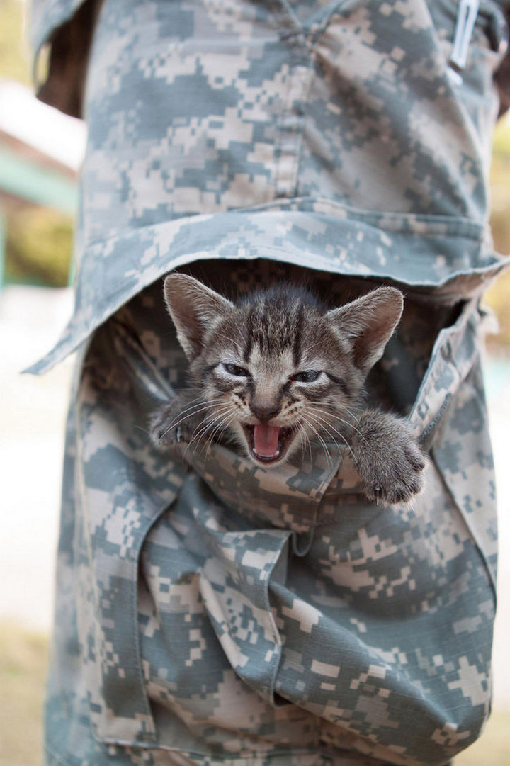46 Happy Images - This adorable kitten in a leg pocket of a United States Army Soldier.