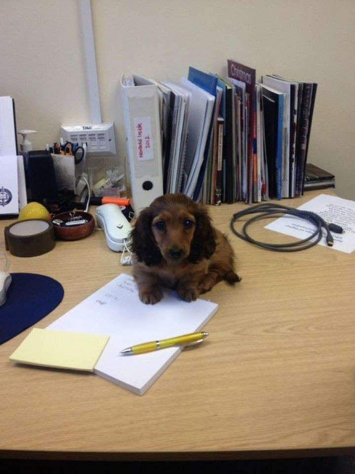 46 Happy Images - This cute munchkin pretending to be a paperweight.