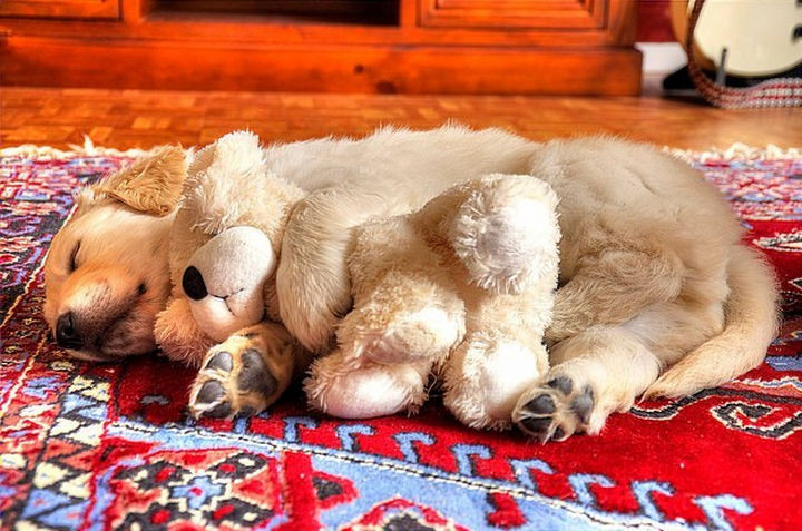 46 Happy Images - This dog taking a nap with his snuggle buddy.