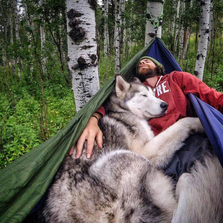 46 Happy Images - This gorgeous Husky enjoying a nap in a hammock with his human.
