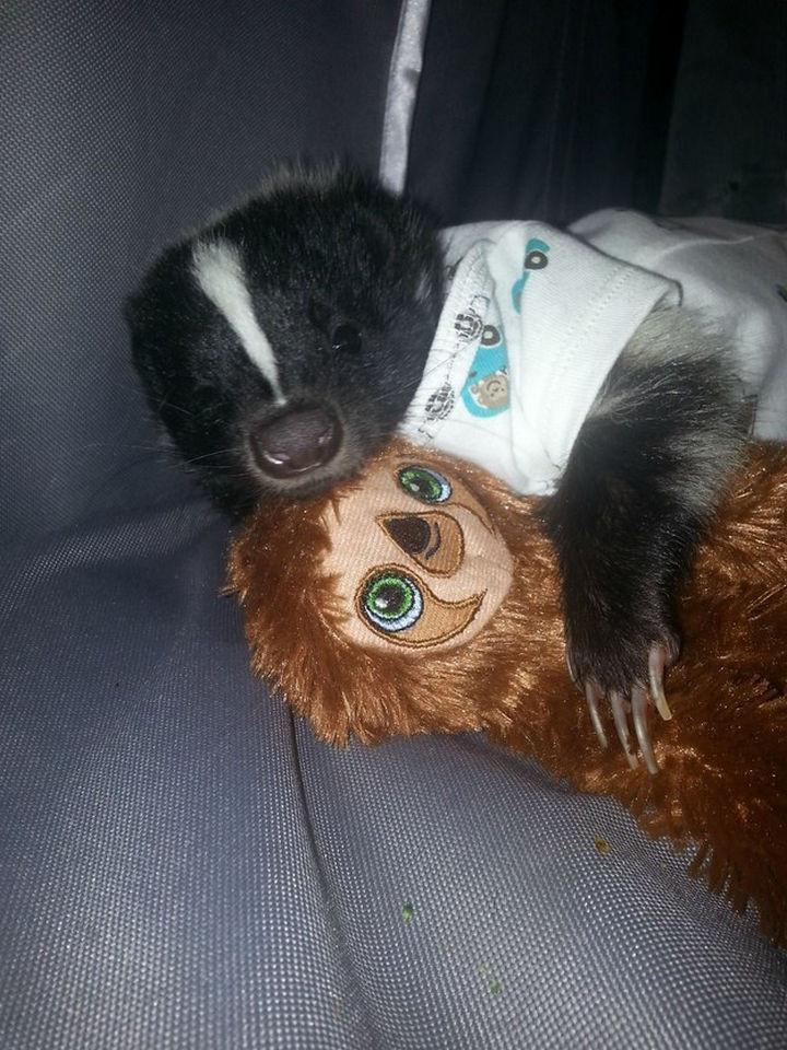 46 Happy Images - This cute skunk wearing a onesie.