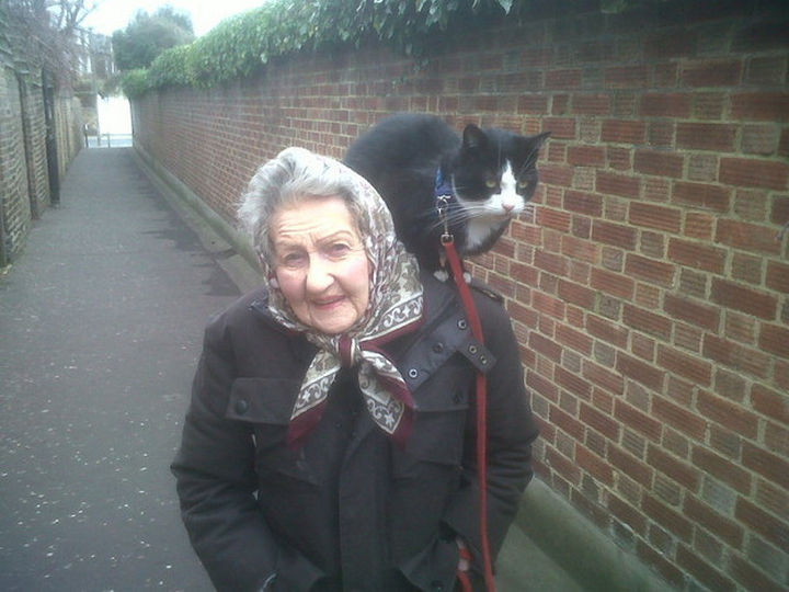 46 Happy Images - This shy cat that clings to her human as they go for a walk.