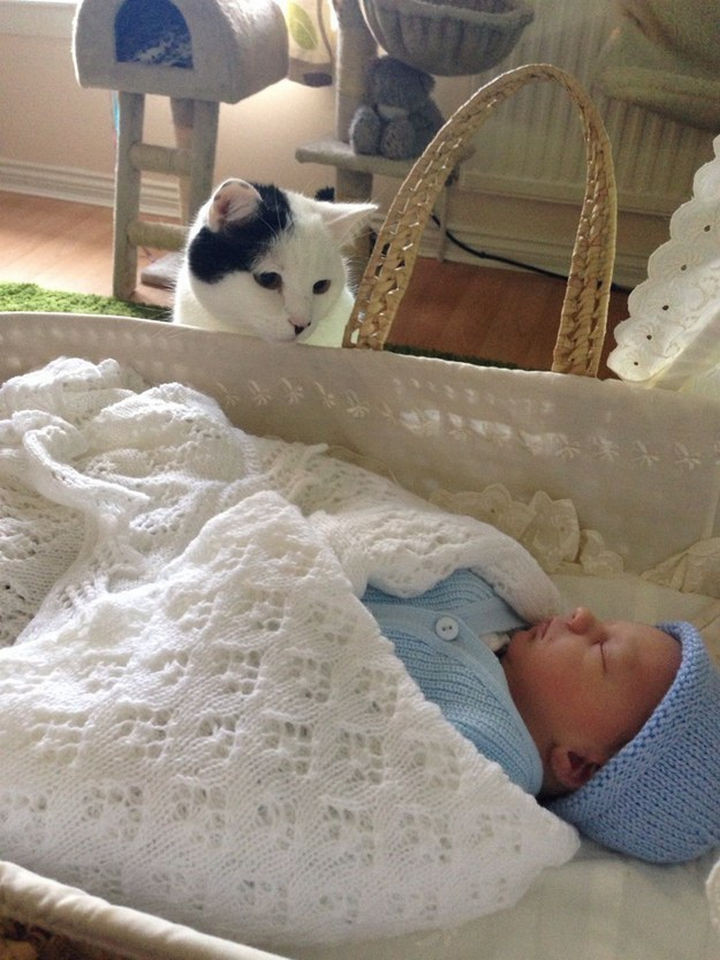 46 Happy Images - This adorable family cat meeting her new baby brother for the first time.