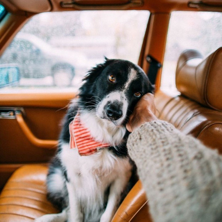 46 Happy Images - This dog being the best car passenger ever.