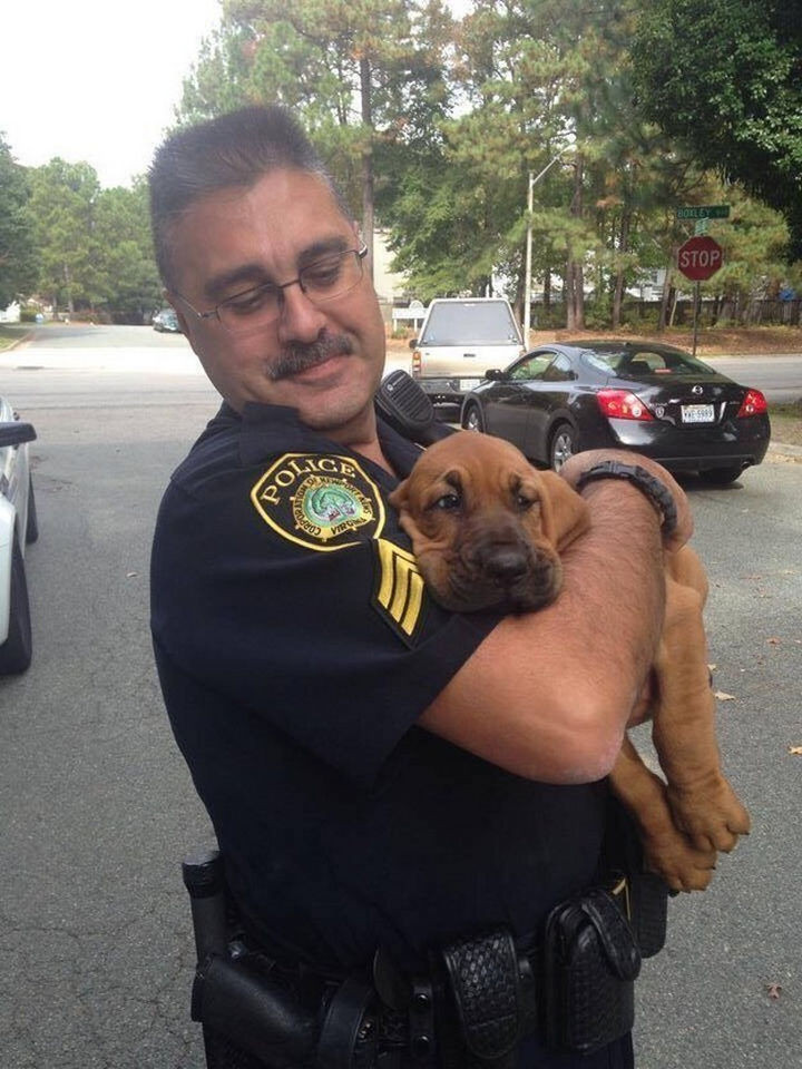 46 Happy Images - This adorable police dog taking a nap on the job.