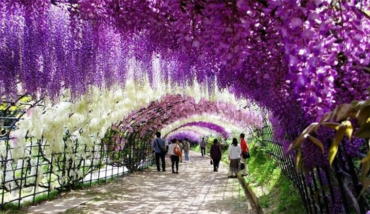 10 Amazing Nature Pictures - Ashikaga Flowering Park in Japan.