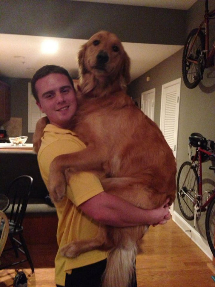 12 Huge Dogs That Still Think They Are Puppies - 90 pounds of love.