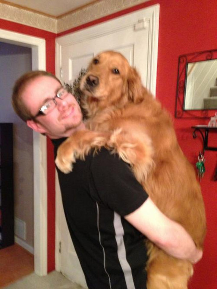 12 Huge Dogs That Still Think They Are Puppies - Say cheese!