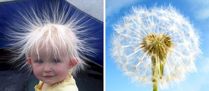 13 Babies That Resemble Celebrities or Something Else - This cute baby with static hair reminds me of a dandelion. Make a wish!