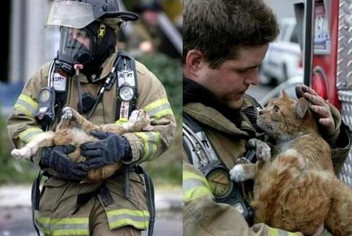 15 Incredible Photos Will Warm Your Heart - A firefighter caring for a cat he just rescued.