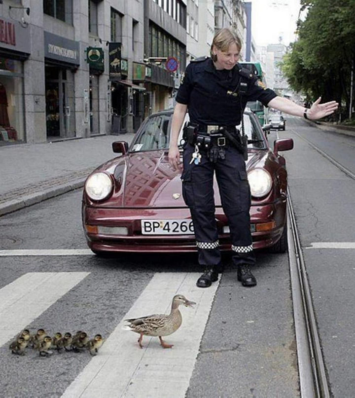 15 Incredible Photos Will Warm Your Heart - An officer clearing the road to help ducks cross the road safely.