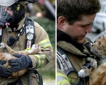 15 Incredible Photos That Will Warm Your Heart.