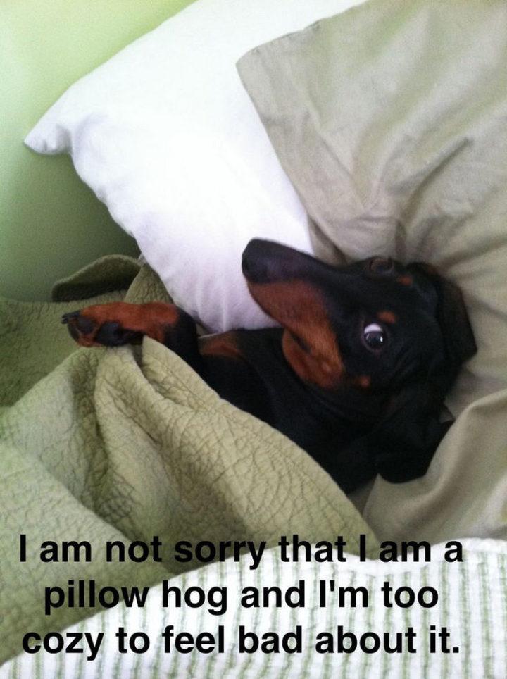 30 Things Only Dog Owners Will Understand - They will hog your bed.
